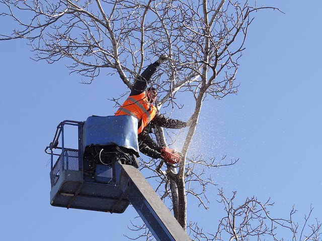 cutting tree branch wichita falls tx